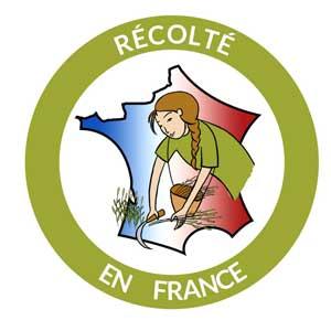Sureau pour dissection végétale récolté en France